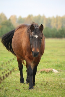 Age-related nutrition for your horse