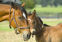 Foaling doesn't always have a happy ending