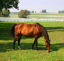 Proactive horse management