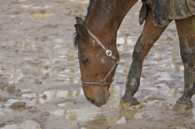 Wet ground + mud = hoof problems