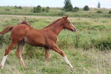 The yearling horse