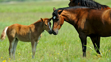 Fighting deadly diarrhea in horses and foals