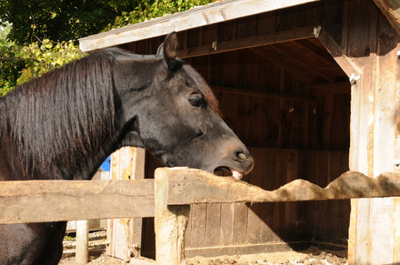 Is Your Horse Eating Your Barn Equimed Horse Health