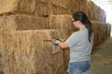 Probing for horse hay sample for testing