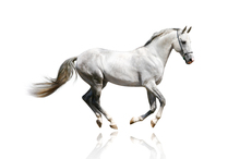 Horse cantering (loping)