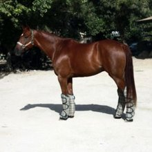 Horse shipping (trailering) boots
