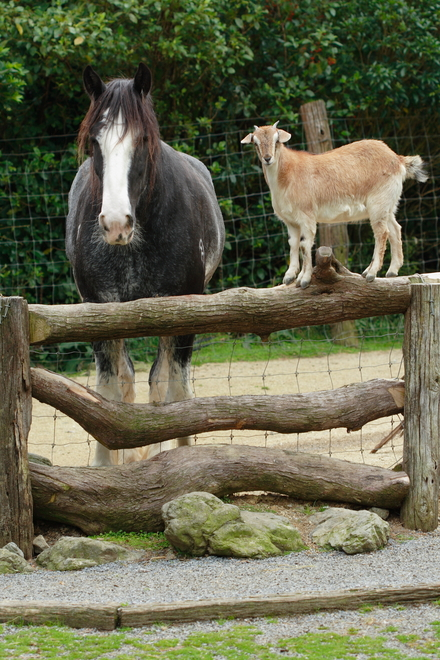 The Top 5 Non-human Companions for Your Horse | EquiMed ...