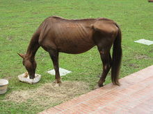 Special easy-to-chew feed for toothless horse