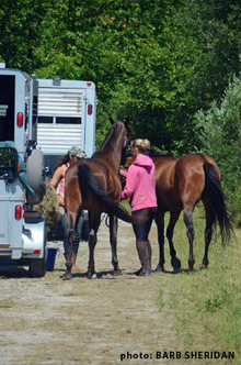 Preventing the spread of contagious diseases when horses travel