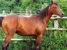 Horse with a sloping shoulder