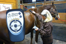 Microcurrent stimulation therapy for horses