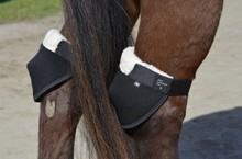Horse wearing Hock Shields