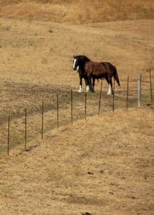 Drought conditions affecting horse nutrition