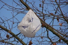 Plastic bag - Seen as predator by a horse