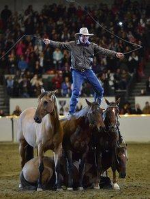 Talented horses of Fantasia
