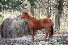 No more unwanted horses