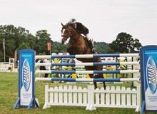 Injury repair keeping horses active