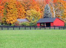 Horse pasture in autumn