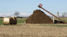 Composting equine stall waste