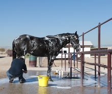 A horse and owner in a wash rack