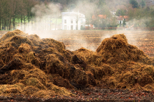Steaming pile of manure