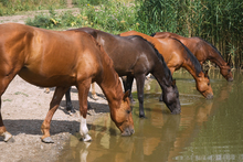 The horse's daily routine includes visits to the water hole