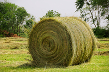 Hay - the basic element of most horse diets