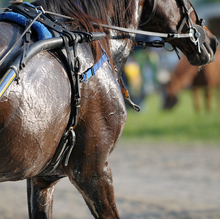 The hard working horse may require an electrolyte supplement