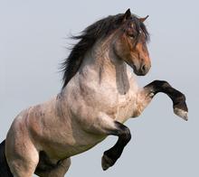 The magnificent stallion