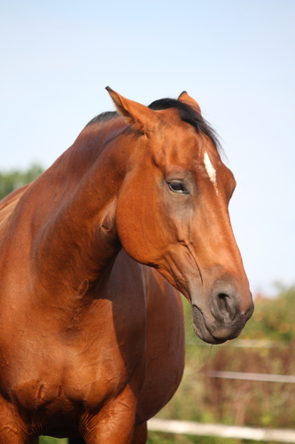 Horse Gestation Timeline Equimed Horse Health Matters