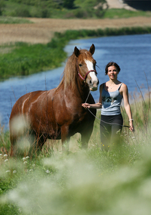 Water as a source of equine herpesvirus infections