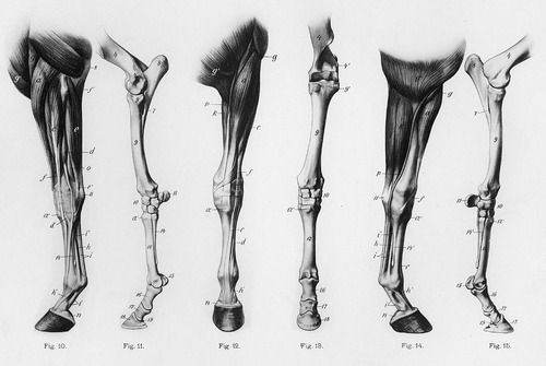 Causes of Equine Lameness | EquiMed - Horse Health Matters