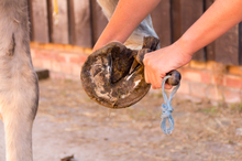 Routine hoof care is essential