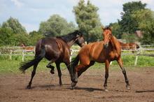 Horse play?
