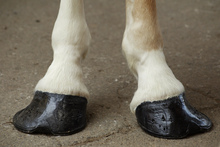 Horse foot conformation problems