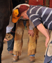 The role of the farrier in treating lameness