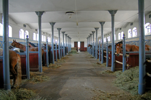 Reduce hoof problems by keeping the barn clean