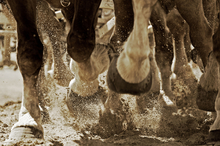 Horse footing and soundness