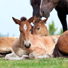 Foals and mares
