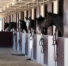 Horses confined to stalls