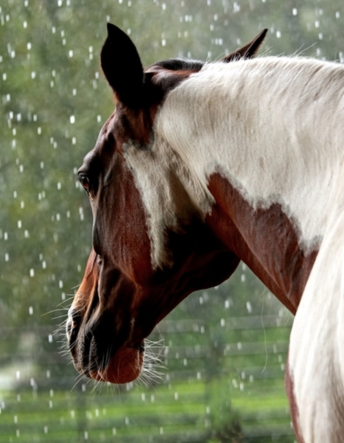 Your horses endocrine system equimed horse health matters this vital system regulates many of the horses body functions ccuart Choice Image