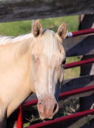 Diagnosing Equine Disease   EquiMed - Horse Health Matters