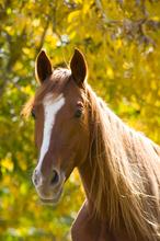 Healthy horse.