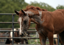 Summer misery for equines