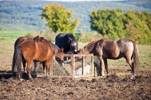 A cost-effective way of feeding some horses
