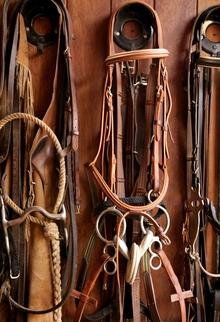 Horse tack including bits