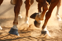 Treating osteoarthritis in horses