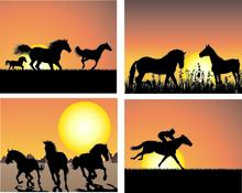 Safeguarding the welfare of horses
