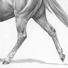A horses's hind legs