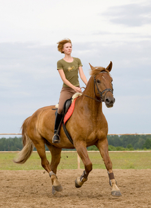 Horse fitness through movement